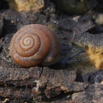 Lessons from a Snail